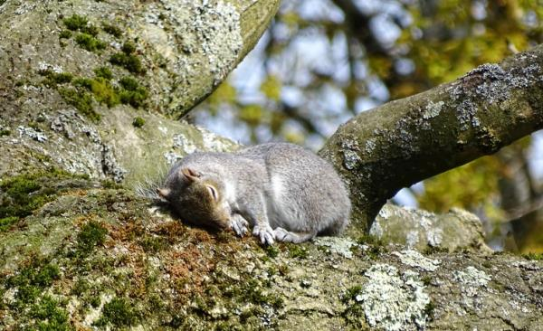 Qué animales hibernan y por qué - Qué es la hibernación y por qué algunos animales hibernan