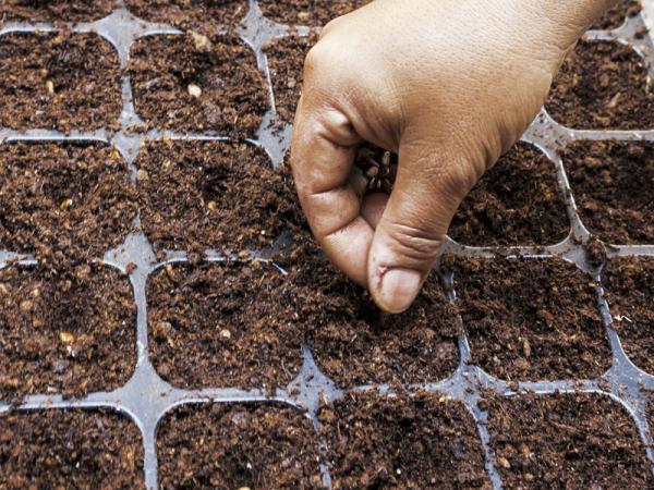 Plantar melones: cuándo y cómo hacerlo - Cuándo y cómo sembrar melones