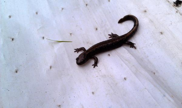 Qué animales son anfibios y dónde se encuentran - Anfibios que viven zonas con bajas temperaturas