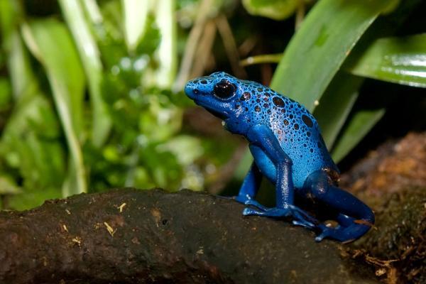 Qué animales son anfibios y dónde se encuentran
