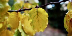 Clorosis en las plantas: qué es y cómo eliminarla