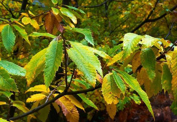 Clorosis en las plantas: qué es y cómo eliminarla - Clorosis en las plantas: síntomas