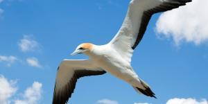 Ecosistema aéreo: qué es, características y tipos
