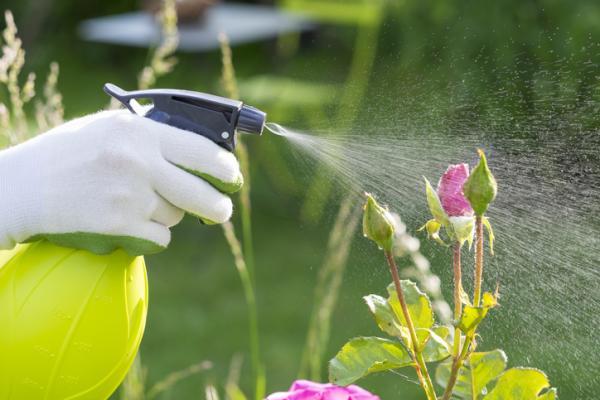 Cómo eliminar los mosquitos en las plantas - Cómo quitar los mosquitos en las plantas