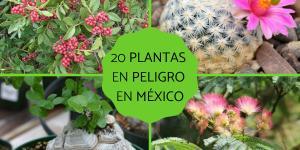 Plantas en peligro de extinción en México