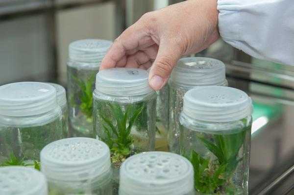 Qué es la biotecnología y para qué sirve - Qué es la biotecnología