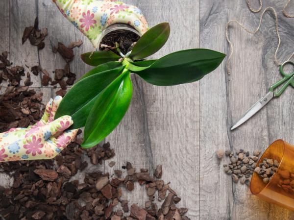 Sustrato para orquídeas: cómo hacerlo - Cuáles son las mejores macetas para orquídeas y cómo prepararlas