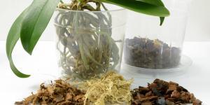 Sustrato para orquídeas: cómo hacerlo