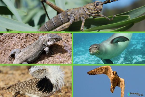Animales en peligro de extinción en Canarias - Más animales en peligro de extinción en las Islas Canarias