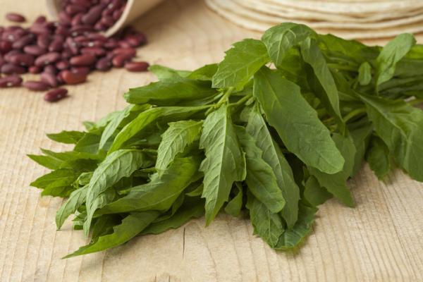 60 plantas medicinales del Perú y para qué sirven - Propiedades medicinales del epazote o paico