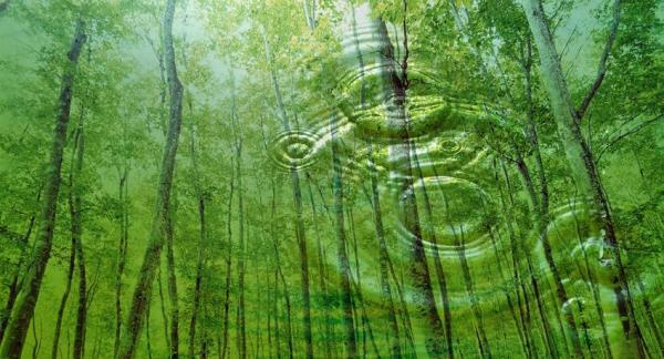 La importancia de los árboles para el medio ambiente