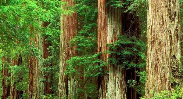 La importancia de los árboles para el medio ambiente - La importancia de los árboles para la naturaleza