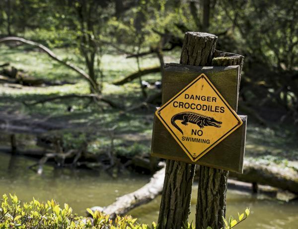 Características principales del cocodrilo para niños - ¿Los cocodrilos son peligrosos?