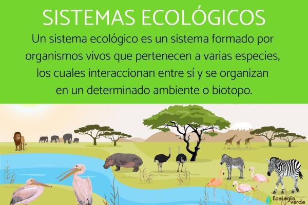 Sistemas ecológicos: qué son y ejemplos