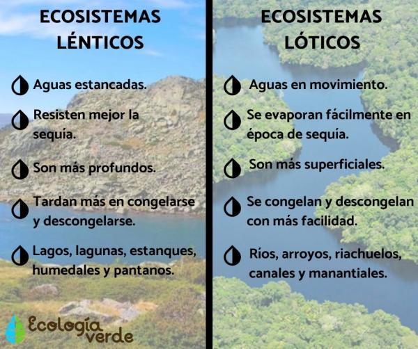 Ecosistemas lóticos: qué son y ejemplos - Diferencia entre ecosistemas lénticos y lóticos