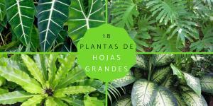 Plantas de hojas grandes