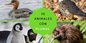Animales con plumas