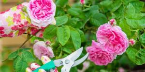 Cómo injertar un rosal