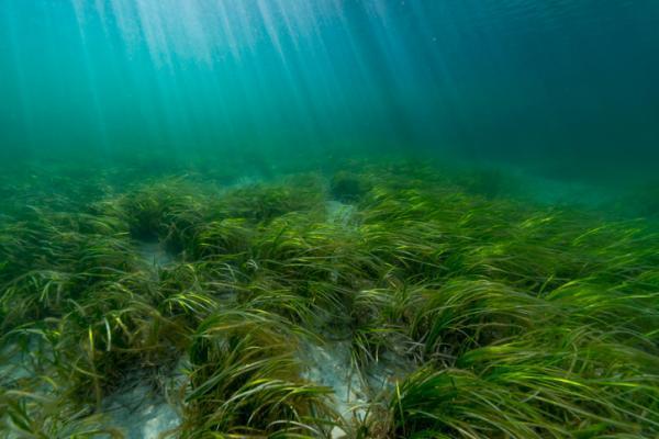 ¿Las algas son plantas?