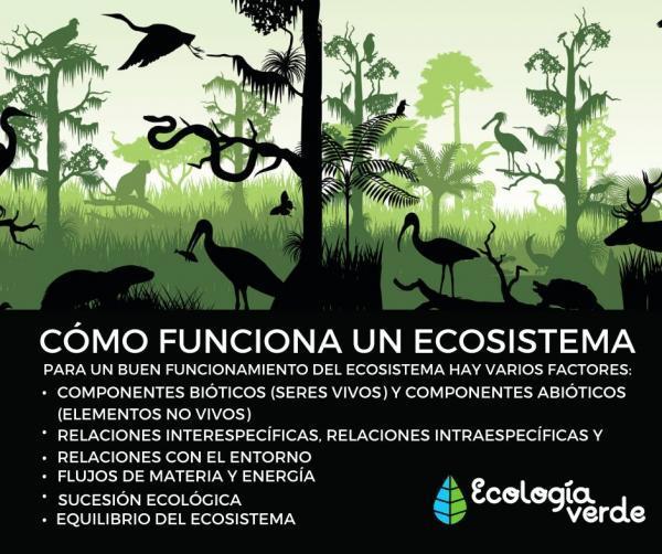 Cuáles son los componentes de un ecosistema - Cómo funciona un ecosistema - resumen