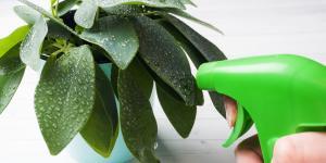 Cómo hacer un abono foliar casero