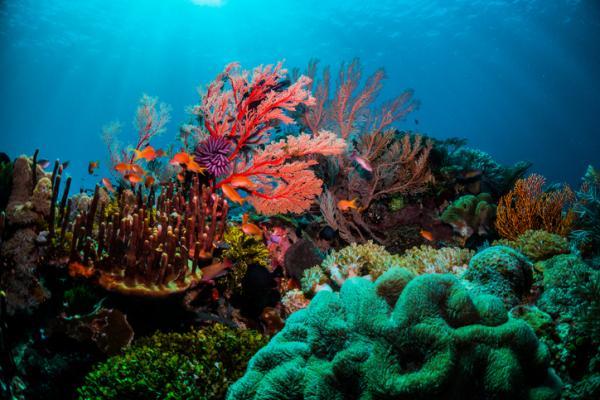 Cuáles son los componentes de un ecosistema