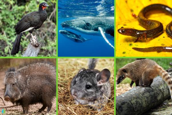Animales en peligro de extinción en América Latina - Otros animales en peligro de extinción en América Latina