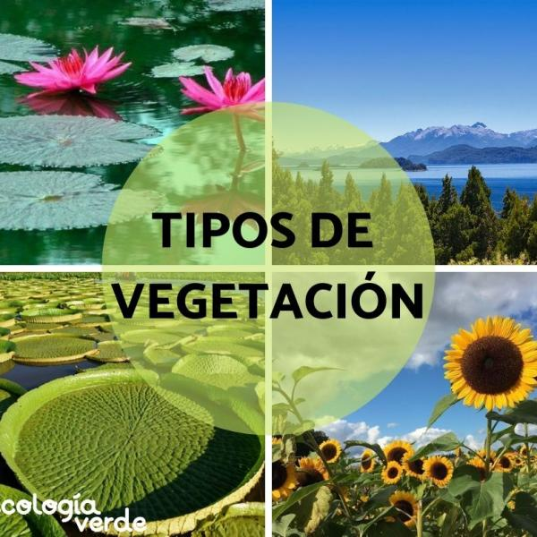 Tipos De Vegetación Características Y Ejemplos Resumen