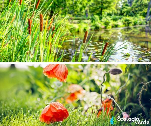 Tipos de vegetación - Tipos de vegetación según el medio en el que está