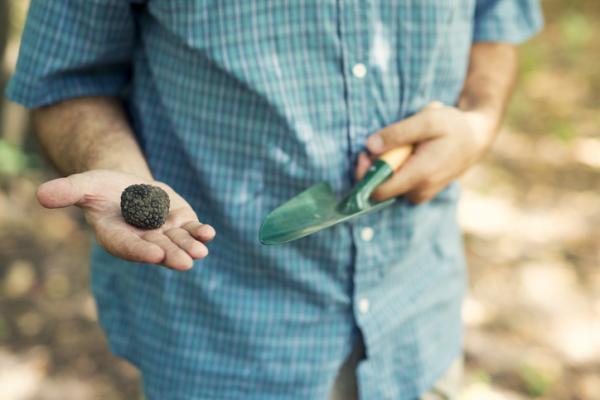 Cómo cultivar trufas - Qué son las trufas y qué es la truficultura