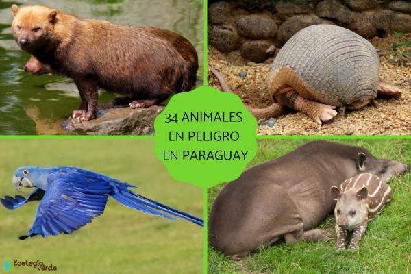 Animales en peligro de extinción en Paraguay