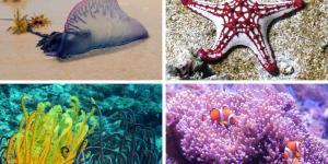 14 animales sin cerebro: lista y fotos