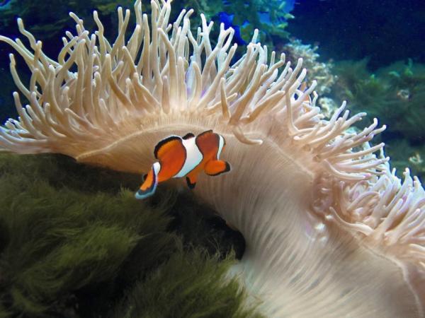 14 animales sin cerebro: lista y fotos - Anémonas de mar