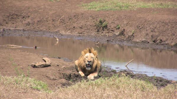 Qué animales viven en la sabana africana - Mamíferos de la sabana africana