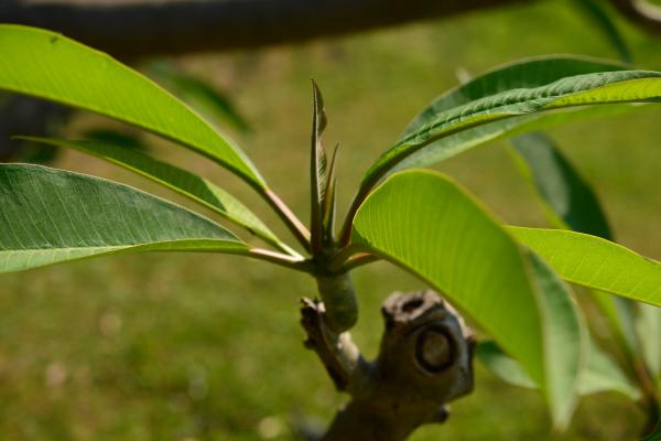 Verticilos: qué son y cuáles son - Qué son los verticilos florales y de las hojas