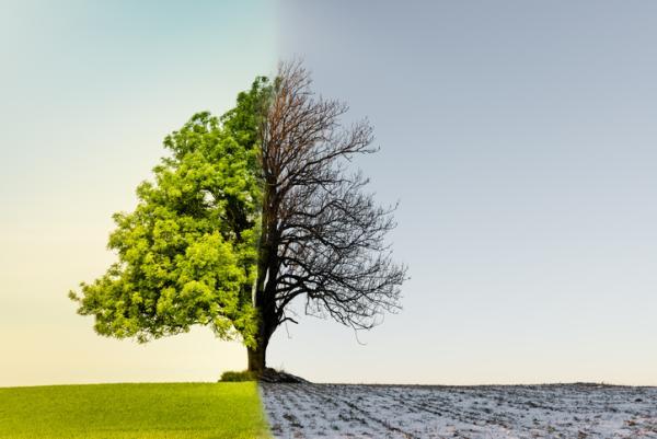 Por qué existen las estaciones del año - Por qué existen las distintas estaciones del año