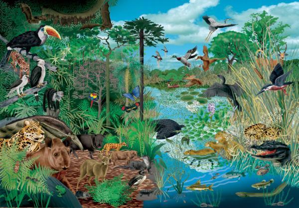 Qué necesitan para vivir los seres vivos - Los seres vivos necesitan un hábitat al que puedan adaptarse