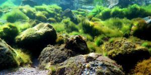 Algas verdes: qué son, características, tipos y ejemplos