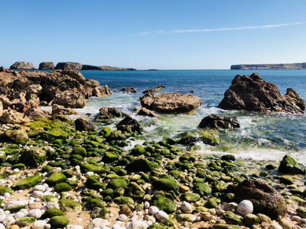 Algas verdes: qué son, características, tipos y ejemplos - Características de las algas verdes