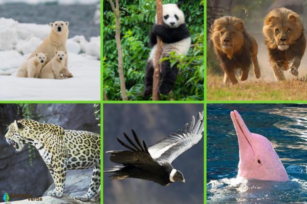 Qué es el hábitat - Ejemplos de hábitats