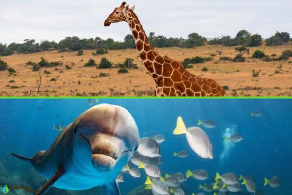 Qué es el hábitat - Tipos de hábitats naturales