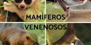 16 mamíferos venenosos