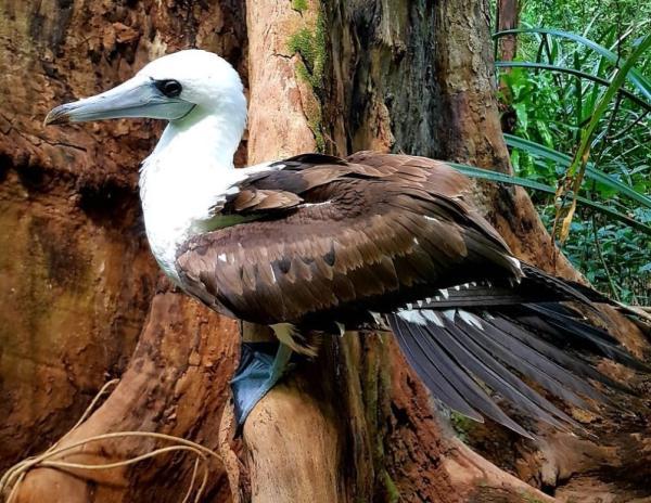 Animales en peligro de extinción en Oceanía - Alcatraz de Abbott