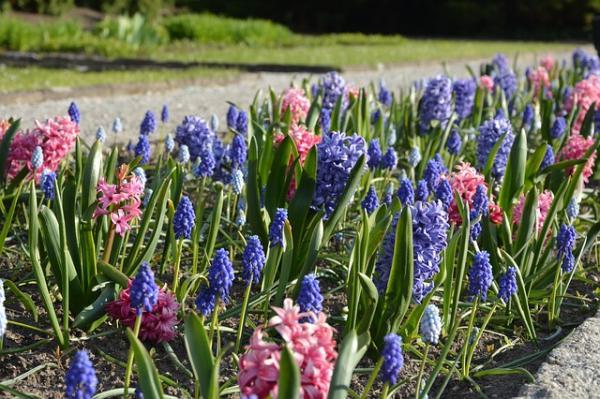 15 plantas de bulbos - Otras plantas bulbosas de fácil cultivo