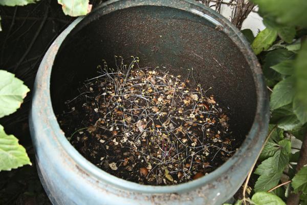 Cómo hacer un compostador casero - Cómo hacer un compostador casero con un bidón