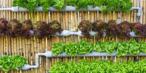 Plantas hidropónicas: tipos, lista de ejemplos y cómo cultivarlas