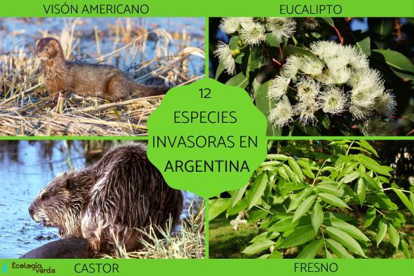 Especies invasoras en Argentina