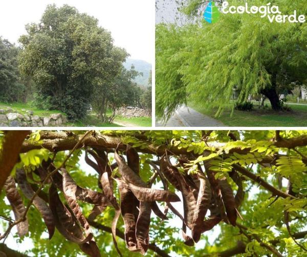 Qué es un monte - Plantas del monte - ecorregión argentina