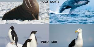Qué animales viven en el Polo Norte y Sur