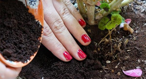 Maneras de utilizar los restos de café en el jardín